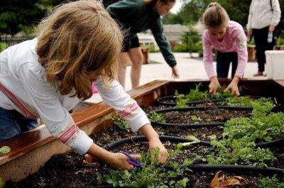 Raleigh Park school garden